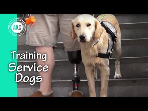 service-dog-training-session