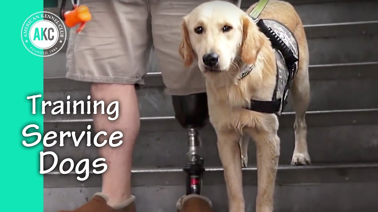 Service Dog Training Session