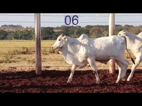 Leilão Machadinho Lote 06