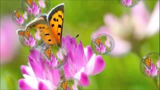 видео Мир бабочек. Семейство кавалеры: Птицекрыл Тифон