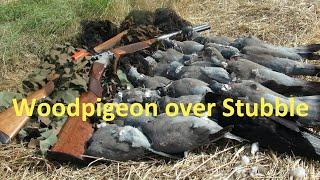 Shooting Woodpigeons over Stubble