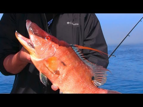 How To Catch Hogfish | Anna Maria Island Bradenton Florida