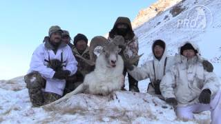 Kyrgyzstan Tian Shan and Hume argali trailer