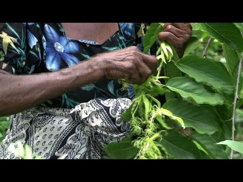 Comoros' ylang ylang - the flower that revolutionised perfume