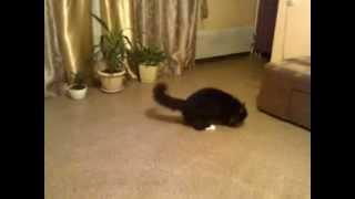 Кот гоняется за мышкой и пьет молоко с лапы