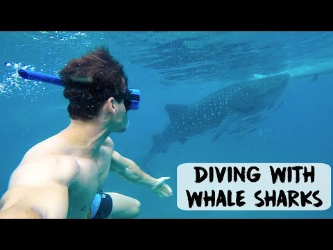 DIVING WITH WHALE SHARKS IN CEBU | Philippines - VLOG #64