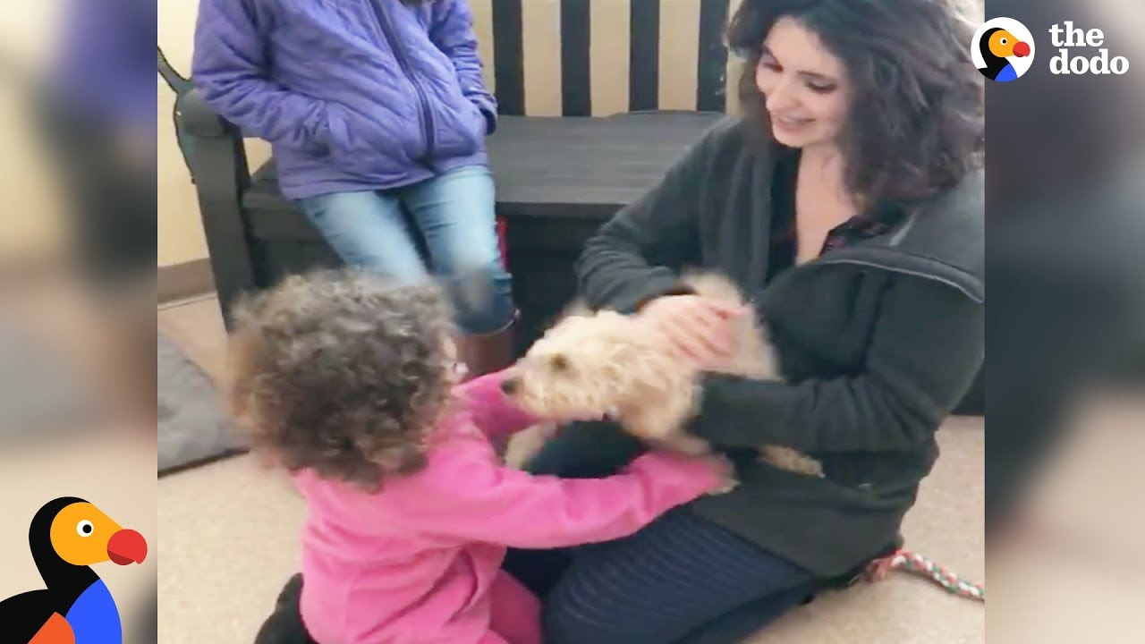 Dog Reunited with Family Gets So Happy After She Recognizes Their Scent |  The Dodo