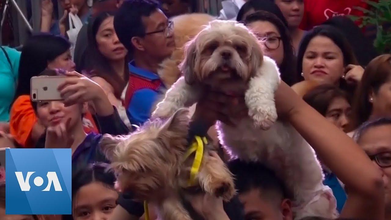 Pet Blessing in Manila, Philippines