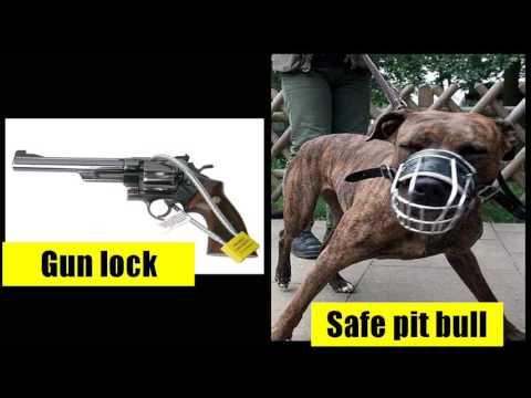 do pitbulls jaws lock