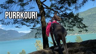 Sphynx Cat Goes Bouldering For The First Time