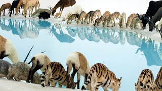 The animals are gathering this summer at GOMA