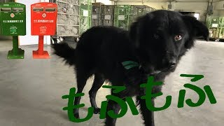 台湾の郵便局カラーは、緑です。 首輪も郵便局カラーの緑だったのが可愛...