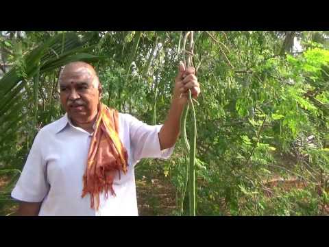 PANCHAGAVYA SERIES -9,Panchagavya Series For Moringa (or) Drum Stick Speech By Dr.K.Natarajan- Tamil