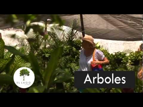 Ex ticas flores tropicales en colima doovi for Viveros en colima