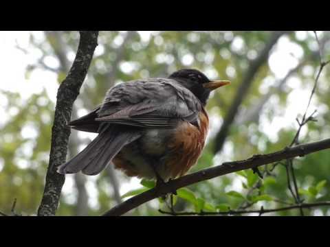 NYC Wildlife in and around Central Park, Manhattan [Raw Version]