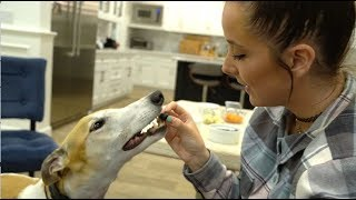 Download My Greyhound Tries Fruits And Vegetables Mp3 and Videos