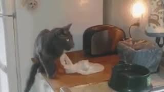 Смотри внимательно, как отучить кота лазить по столам!!!!