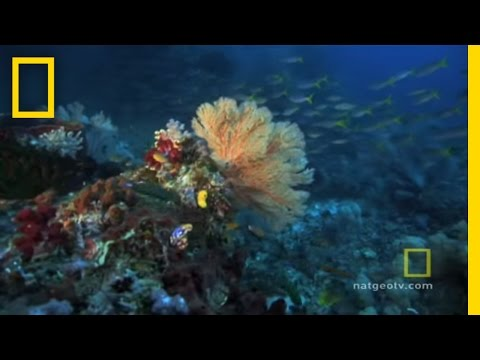 Great Barrier Reef | Exploring Oceans