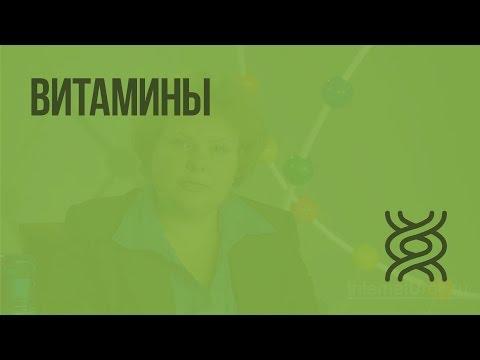 Витамины. Видеоурок по биологии 8 класс