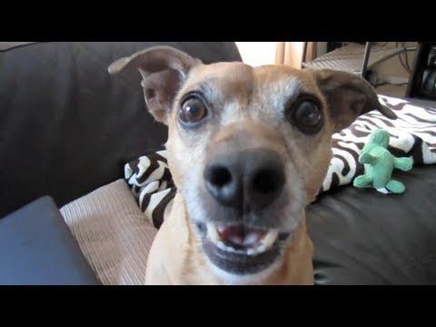 PNUT THE TALKING DOG