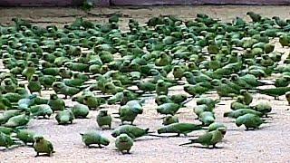 3000 попугаев дома