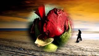 Afghan new song Zar Sha by Sharon Osser 2012