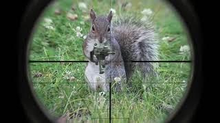 Война животных+_+