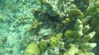 Indigo Snorkeling Adventure Thumbnail