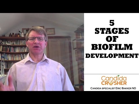 The 5 Stages of Biofilm Development