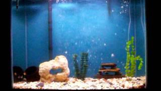 40 Gallon Aquarium With Diy Painted Background