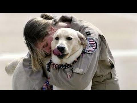 Dogs Welcoming Soldiers Home Compilation 2016