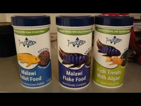FREE Fish Science Malawi Food!!! 👍 😏