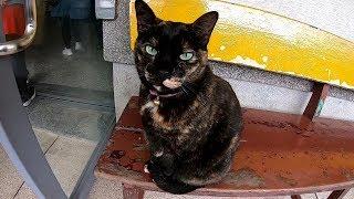 台湾の猴硐(ホウトン)猫村では駅の中まで猫だらけだった