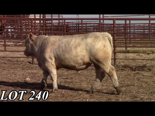 Mead Angus Farms Lot 240