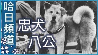 忠犬八公的故事 - 澀谷車站八公銅像的由來