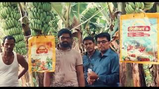 || एकरात खोडवा केळी | पिकाचे आठ लाखांचे उत्पन्न | केळी लागवड माहिती | देसाई यांची यशोगाथा