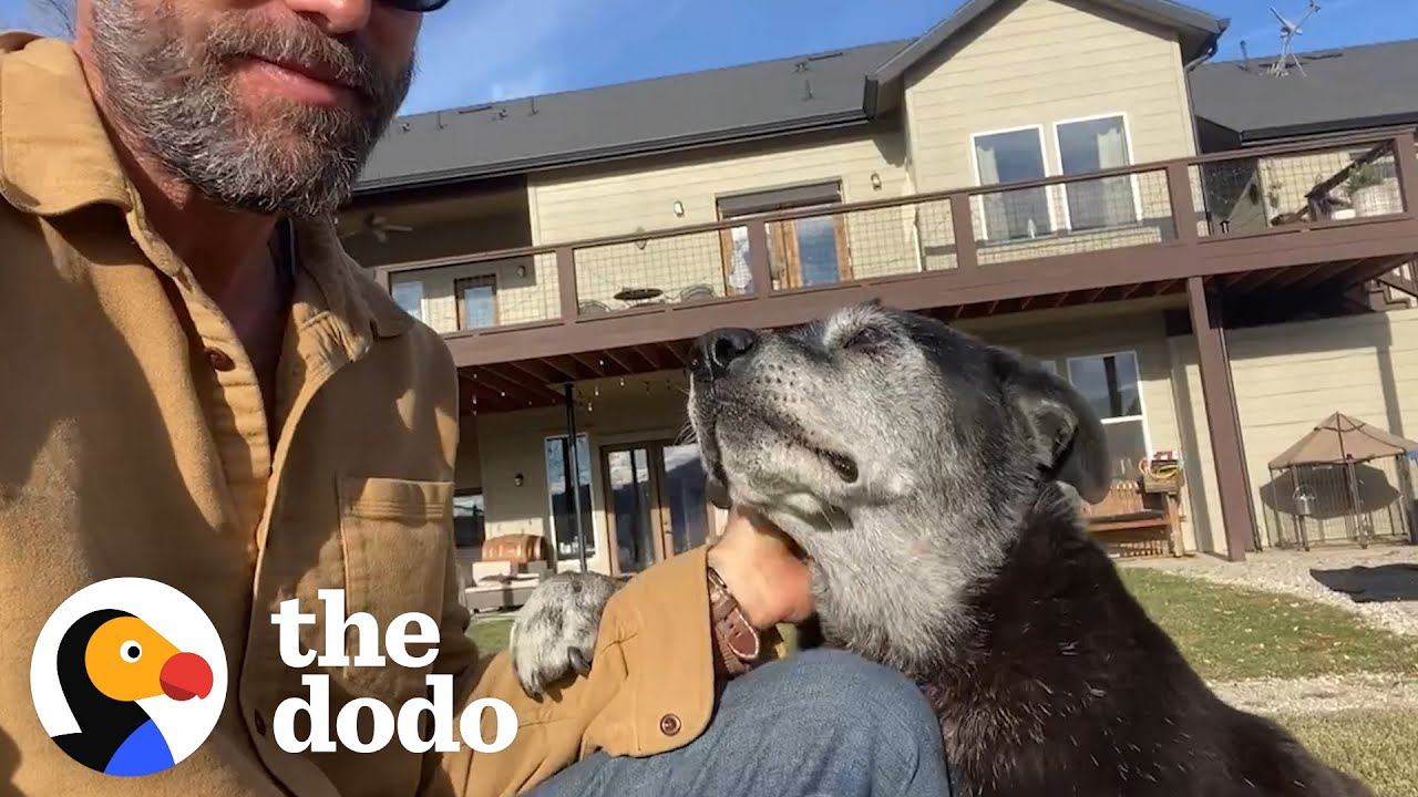 Senior Dog Abandoned At The Shelter Because of Cancer, Gets Second Chance | The Dodo Foster Diaries
