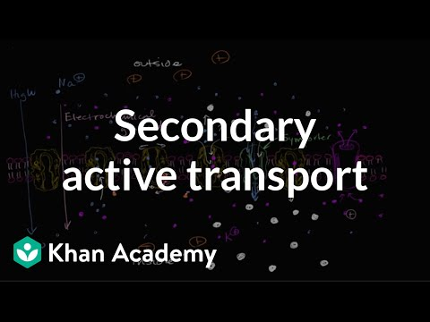 Electrochemical gradients and secondary active transport | Khan Academy
