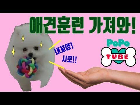 #17. 강아지장난감으로 하는 포포의 애견훈련!ㅣBaby dog toy training
