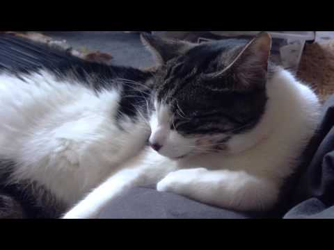 A Day In Life With A Cat (Home Movie, 2015)