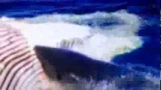 Jaws 1975 Trailer Voice Over (Percy Rodriguez Impression)