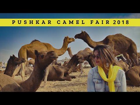 Pushkar Fair 2018 - Part 1   Largest Camel Gathering In The World   Rajasthan   DesiGirl Traveller