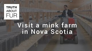 Visit a mink farm in Nova Scotia