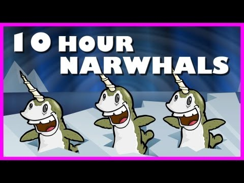 Narwhals  10 Hours