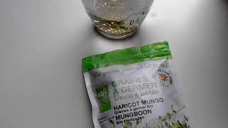 Taugé kweken - kiemgroente - Mung bean sprouts.