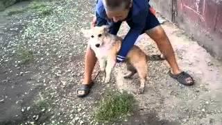 Грязные собаки 3