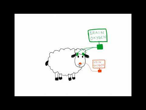 assessment-of-a-brain-oximeter-in-a-sheep-model-of-acute-brain-injury---video-abstract-id-235804