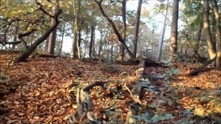 herfst in Oisterwijkse bossen en vennen Van Voorste Goorven naar Staalbergven