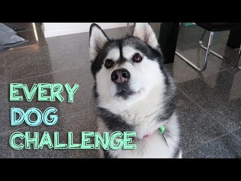 ALL dog challenges with my husky (JACK)
