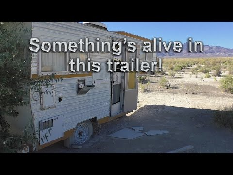 Thumbnail: Something Is Alive In This Abandoned Trailer!